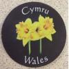 Slate Welsh Coaster - Daffodil
