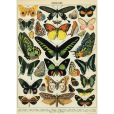 Butterflies Wrapping Paper (and/or Poster)