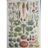 Garden Produce Wrapping Paper (and/or Poster)